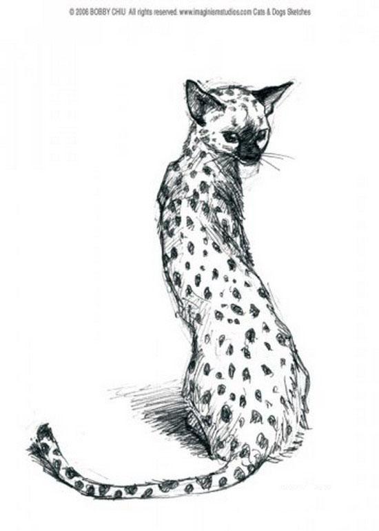 Мило кошковое рисунки кошек от