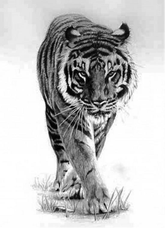 Рхема вышивки крестом 'Тигр'