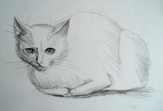 Рисунки кошек 25 картинок природа