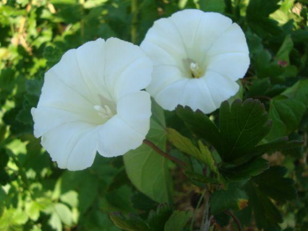 Красивые цветы 10 фото природа