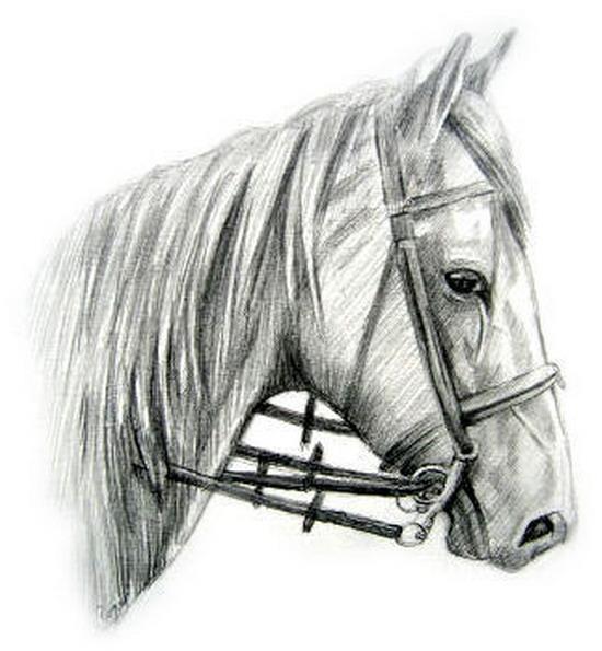 Рисунки лошадей 26 картинок природа
